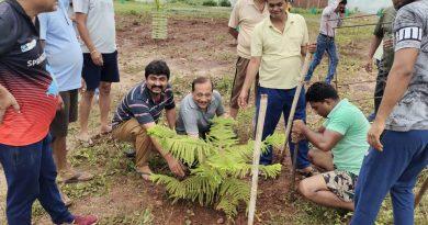 सिहोरा में संगठित युवा टोली ने लगाए सौंदर्ययुक्त वृक्ष